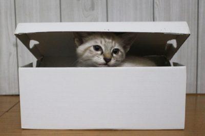 狭い箱に入るネコ